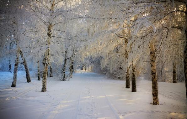 Картинка зима, дорога, лес, небо, снег, деревья, пейзаж, природа, white, forest, road, sky, trees, nature, beautiful, …