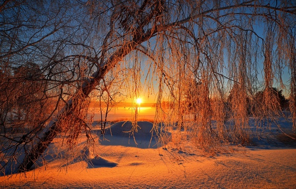 Картинка зима, небо, солнце, снег, деревья, пейзаж, природа, восход