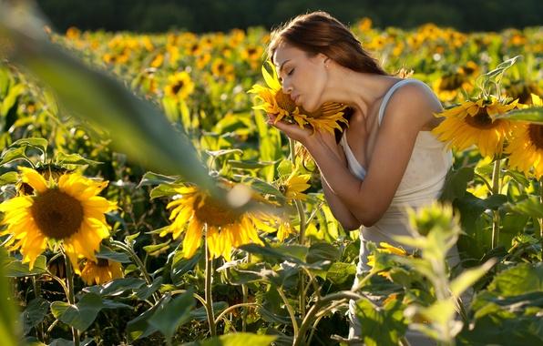 Картинка поле, девушка, подсолнухи