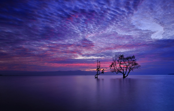 Картинка небо, облака, горы, озеро, дерево, вечер, зарево