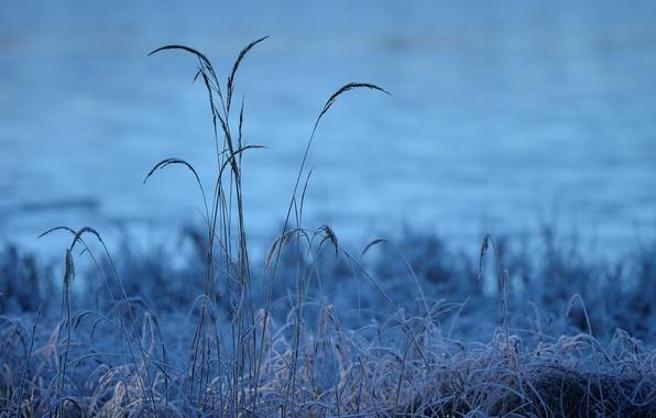 Картинка холод, иней, трава, утро, мороз, травинки