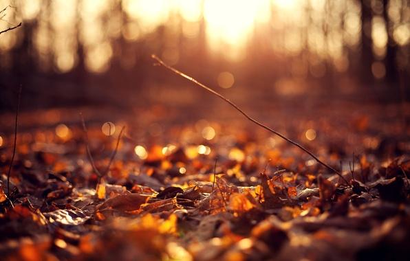 Картинка осень, цветок, листья, солнце, макро, цветы, фон, розовый, widescreen, обои, лепестки, wallpaper, листочки, flower, широкоформатные, …