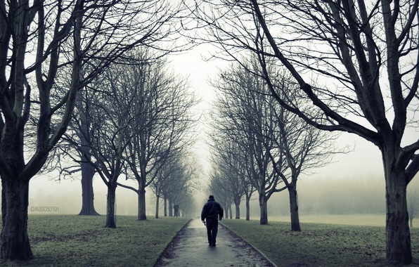 Картинка дорога, осень, деревья, туман, парк, одиночество, настроение, ветви, один, человек, мужчина, прогулка
