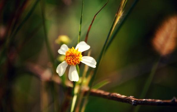 Картинка цветок, листья, макро, растения, лепестки, стебель