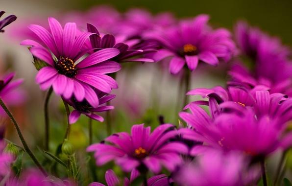 cvety-makro-horoshee-kachestvo.jpg