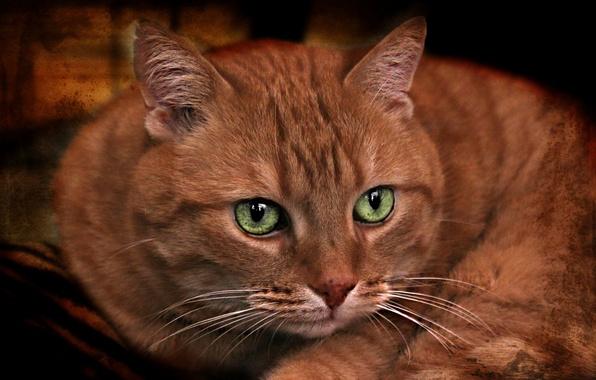 Картинка кот, взгляд, текстура, мордочка, зелёные глаза, рыжий кот, котофей
