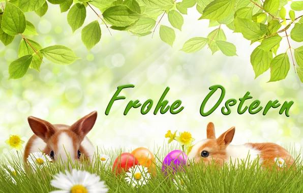Картинка цветы, яйца, весна, кролик, Пасха, тюльпаны, flowers, tulips, spring, Easter, eggs, decoration, Happy