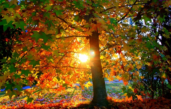 Картинка осень, листья, солнце, свет, закат, парк, дерево, листва