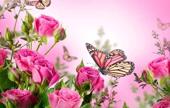 Картинка бабочки, цветы, розы, цветение, pink, blossom, flowers, beautiful, roses, butterflies