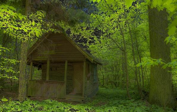 Картинка лес, листья, деревья, заросли, домик