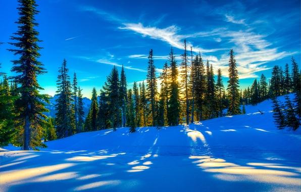 Картинка зима, лес, небо, снег, деревья, пейзаж, закат, ель, склон