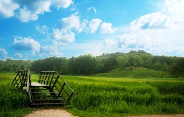 Картинка лес, трава, деревья, мост, луг