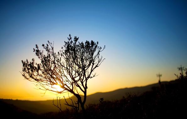 Картинка небо, солнце, свет, природа, пейзажи, вечер, кусты, sunset, закат солнца, bushes, sundown nature