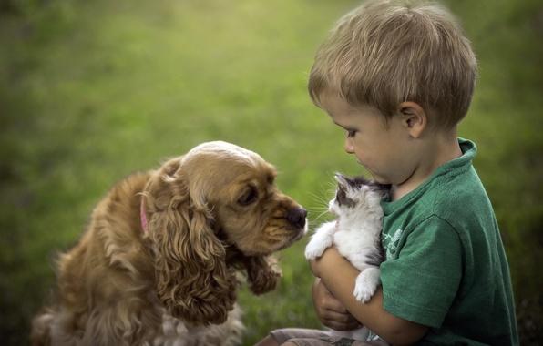 Картинка кошка, собака, мальчик