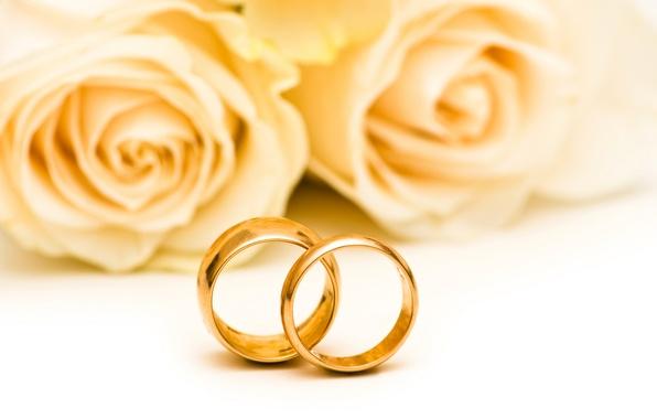 Картинка цветы, розы, flowers, обручальные кольца, roses, wedding rings