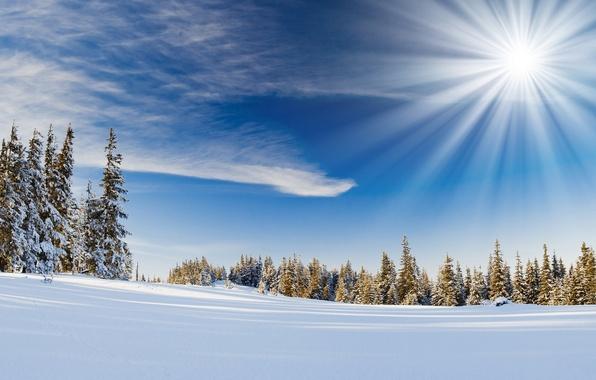 Картинка зима, снег, деревья, природа, дерево, холмы, пейзажи, вид, ель, ели, ёлка, ёлки, места, dual, multi