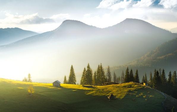 Фото обои горы, туман, утро, ели, стог, домики, Украина, Карпаты