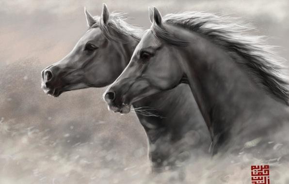 Картинка кони, лошади, арт, бег, пара, головы