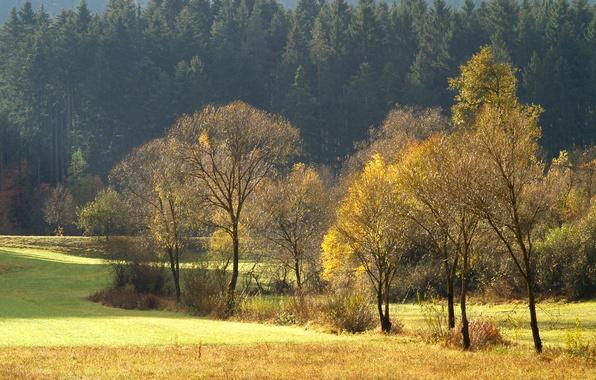 Картинка поле, лес, деревья, поляна, Осень, хвоя
