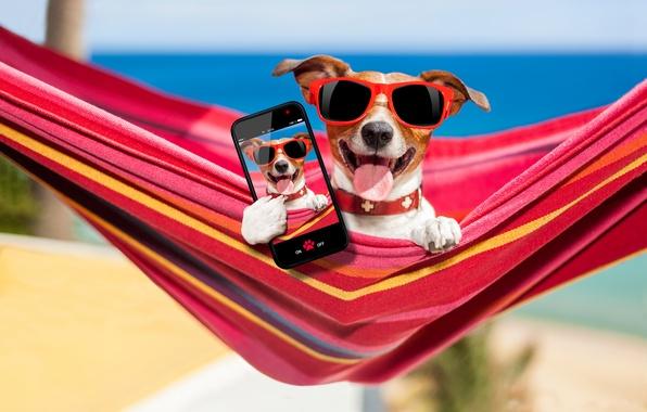 Картинка песок, море, пляж, фото, отдых, очки, гамак, боке, смартфон, Джек-рассел-терьер