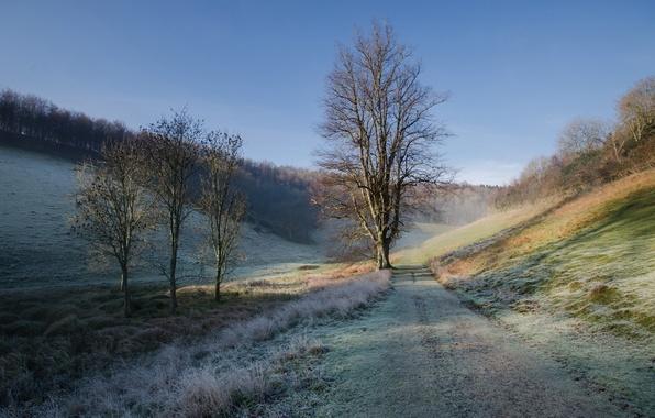 Картинка иней, дорога, осень, небо, трава, дерево, холмы, утро
