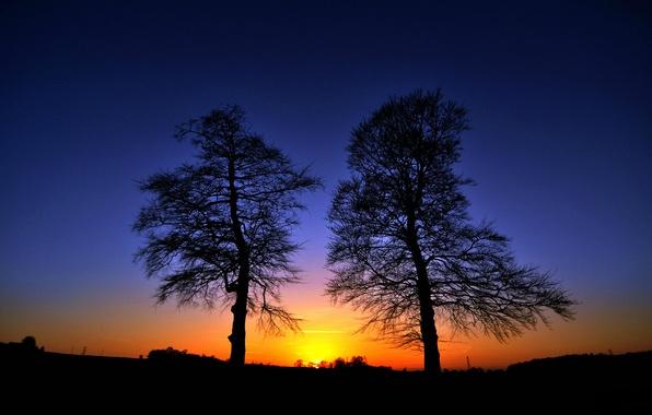 Картинка небо, деревья, закат, силуэт, зарево