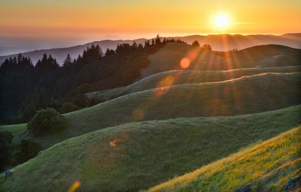 Картинка лес, трава, солнце, лучи, роса, блики, холмы, утро