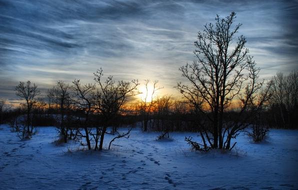 Картинка зима, снег, деревья, пейзаж, закат, природа, вечер, мароз