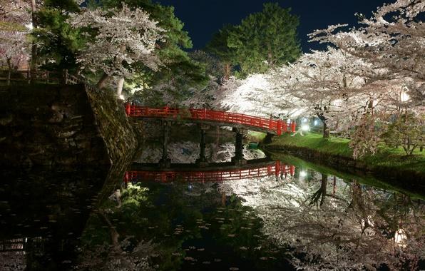 Картинка свет, деревья, цветы, ночь, мост, парк, япония, весна, сад, водоем