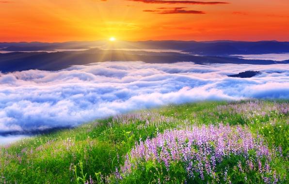 Природа пейзаж облака солнце травка