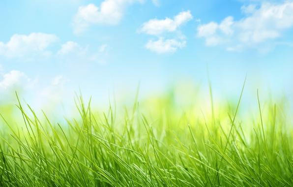 Картинка небо, облака, природа, grass, травка, sky, nature, clouds