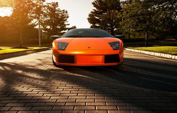 Картинка цветы, оранжевый, тень, Lamborghini, брусчатка, блик, ламборджини, Murcielago, orange, ламборгини, мурселаго