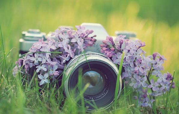 Картинка трава, цветы, фото, фотоаппарат, сирень, зенит, фотокамера
