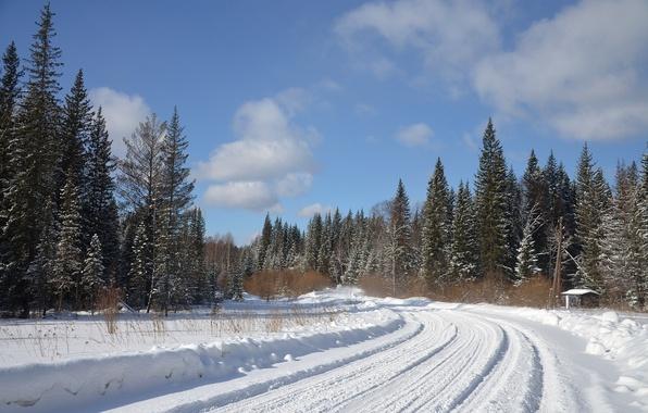 Картинка зима, дорога, лес, снег, природа, фото, ель, поворот