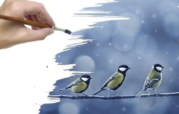 Картинка снег, рисунок, рука, ветка, птички, кисть, синицы