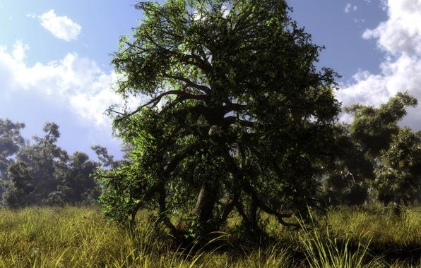 Картинка лес, лето, трава, облака, природа, дерево, арт, klontak