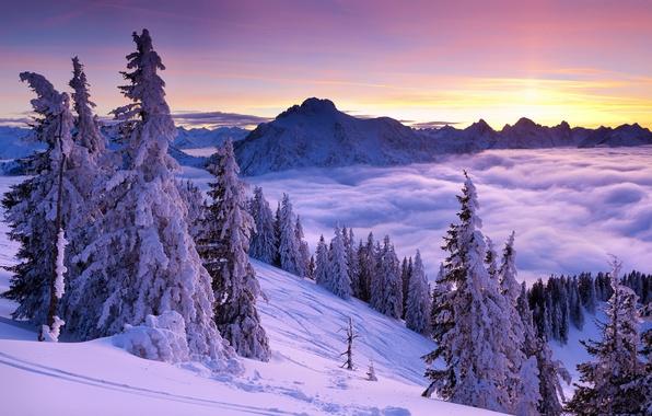 Картинка зима, небо, облака, снег, деревья, горы, природа, туман, ели