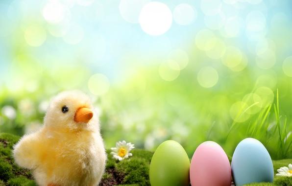 Картинка трава, цветы, ромашки, яйца, весна, colorful, пасха, grass, цыпленок, flowers, spring, крашеные, eggs, easter, daisy, …