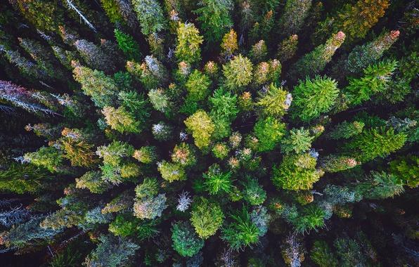 Картинки по запросу природа лес