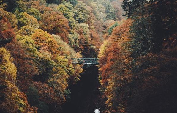 Фото обои природа, деревья, осень, река