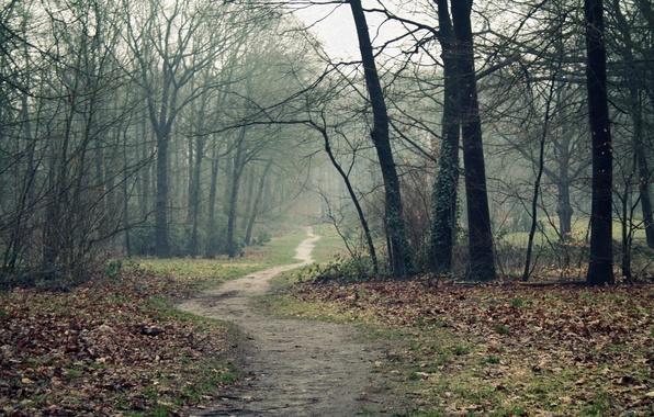 Картинка дорога, осень, лес, деревья, туман, тропинка