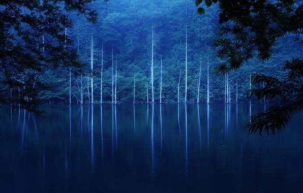 Картинка лес, деревья, ночь, туман, озеро, склон