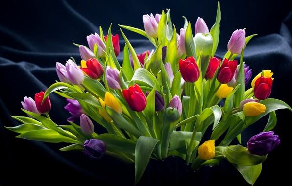 Обои Тюльпаны На Рабочий Стол