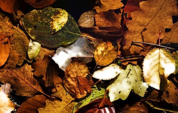 Картинка осень, листья, природа, листва, autumn, leaves
