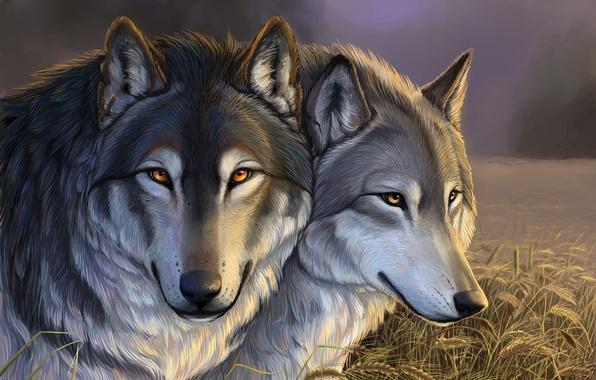 Картинка поле, трава, тучи, колосья, Волки