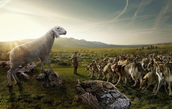 Картинка поле, небо, природа, камни, юмор, стая, пастух, овца, Волки