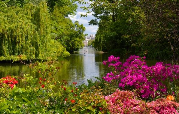 Картинка деревья, озеро, парк, Англия, Лондон, кусты, London, England, St. James's Park, Вестминстер, Westminster, рододендроны, Сент-Джеймсский …