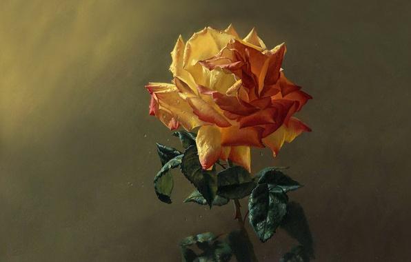 Картинка зелень, цветок, листья, капли, свежесть, роса, роза, лепестки, живопись