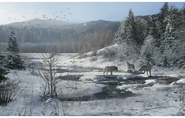 Картинка зима, лес, снег, ручей, волки