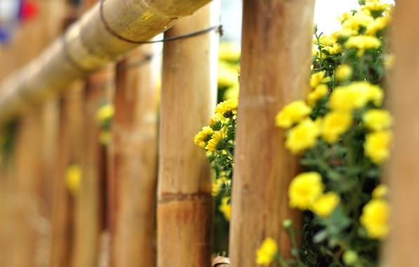 Картинка макро, цветы, желтый, фон, дерево, widescreen, обои, забор, ограда, ограждение, wallpaper, цветочки, flower, yellow, широкоформатные, …